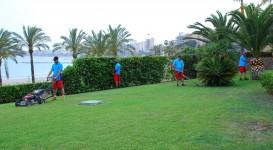 Proyectos | jardineria-273x150